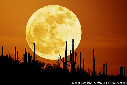 Saguaro Moon photo