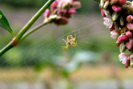 Small spider in a web
