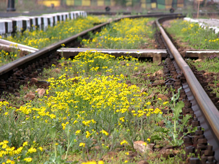 Flowers on the railway
