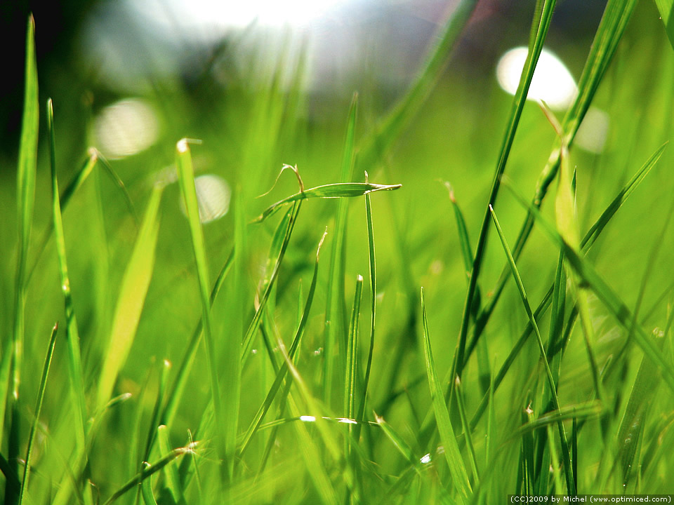 img_6448_green_grass_sharpened.jpg