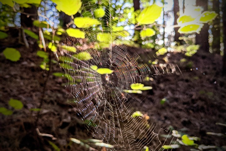 The forest of Marchaevo: A magical web.